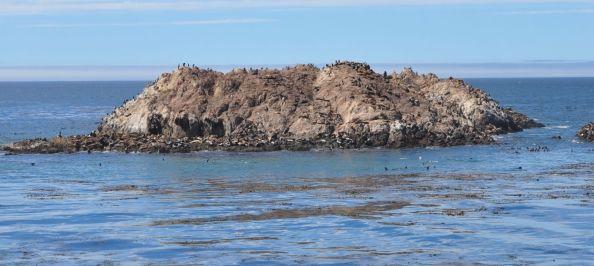 A toutes fins utiles : les phoques ont des couleurs de peau qui se confondent avec le rocher.